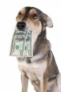 MoneyDog